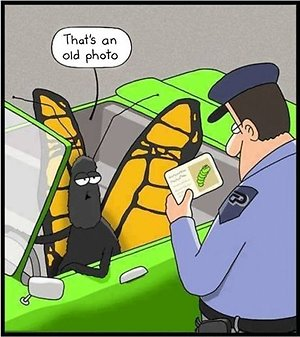 Psychotherapy . Butterfly cop