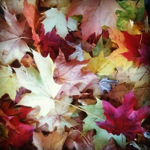 Home. coloured leaves